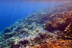 41_Coral_reef_at_Barren_Island_(Lenz_Gunther)