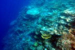 76_Another_picture_of_the_beautiful_coral_reef_in_Hagrandhoo_North-Gaafu