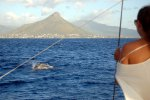 08_Dolphin_watching_in_front_of_Tamarind_Bay