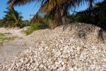 22_Mountains_of_oyster_shells_lying_on_the_beach