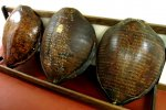 22_Turtle_shells_engraved_with_old_dates_and_names