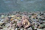 21_Mainly_coralline_algae_under_the_waves_of_the_outside_reef