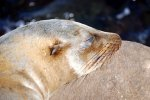 14_Galapagos_sea_lion_close_up