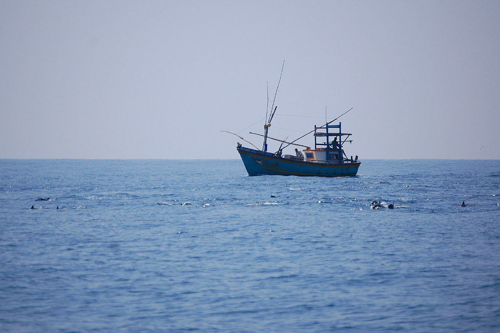 Long snouted Spinner Dolphins and Sri Lanka Fishing Boat